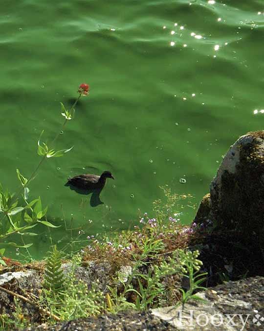 Lac Tranquille de Combourg