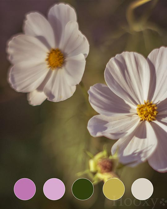 palette-couleurs-orchidee-hooxy-agence-communication-graphisme-creation