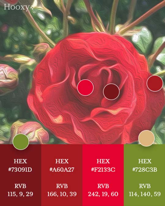 palette-couleurs-rose-hooxy-agence-communication-graphisme-creation